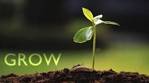 grow-seedling